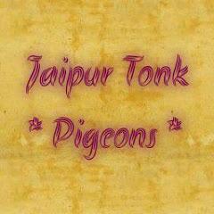 Jaipur Tonk Pigeons