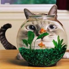 Wonder Pets & Aquariums