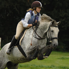 Purebred Spanish Horses