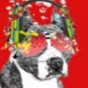 Zamar Terrier Стримы