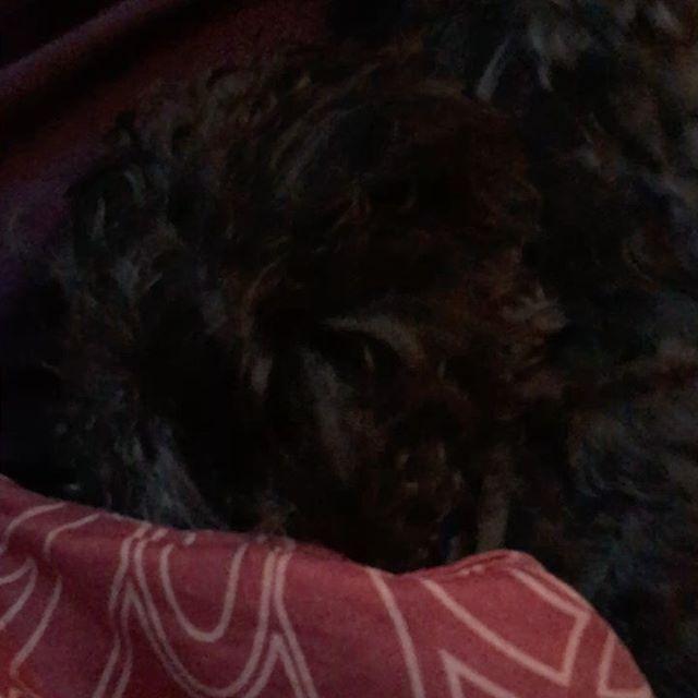 Playful puppy 💚  #dog #doggo #dogsofinstagram #dogstagram #puppy #pupper #puppiesofinstagram