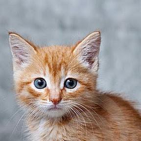 Ginger Kat