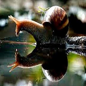 Snail_Butler