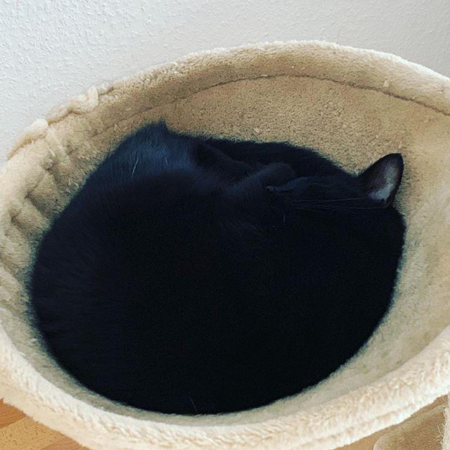 ..und wenn du dein Katzi anschaust, is die Welt einfach in Ordnung..🥰 #katzenliebe #kätzchen #blackcat #meinkatzenkind #fressenkönntichsievorliebe