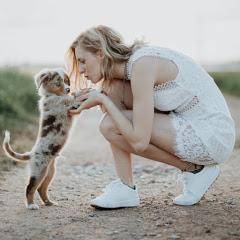Miniaussie Dog