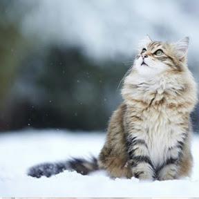 عاشقة القطط عاشقة القطط