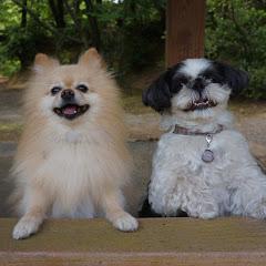 犬たちとニコニコ生活
