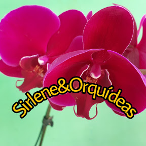 Sirlene & Orquídeas