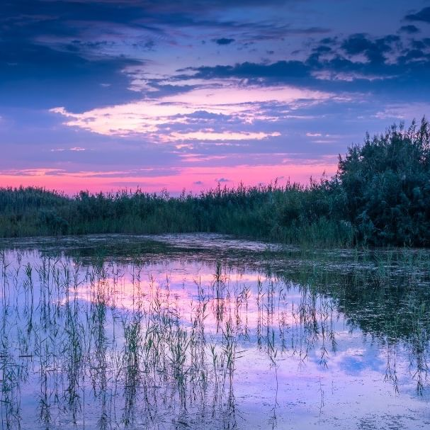 The first image from my latest video - video link in my BIO  Reeds before sunrise - El Hondo  The sky was really beautiful about 30 minutes before sunrise at El Hondo (or El Fondo) nature reserve in Spain and the colours reflected nicely in the still water with some reeds to break up the scene  #elfondo #elhondo #elche #elxe #bushes #costablanca #dawn #lake #naturereserve #peaceful #pre-sunrise #redsky #reeds #reflections #spain #tranquil #water