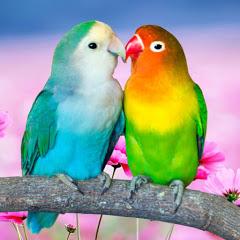 Birds Palace