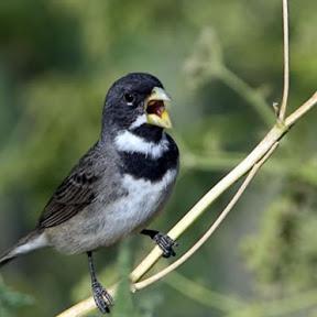 Canal dos Pássaros OFICIAL