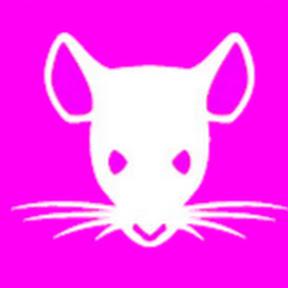 Mouse Trap 2019