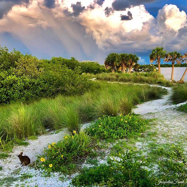 Don't go down that bunny trail ...unless it leads to unexpected beautiful views. ——————————————— #fun_in_florida #roamflorida #LoveFL #bestofthesunshinestate_cfinds #instagram_florida #florida_greatshots #staysaltyflorida  #igers_tampa  #hashtagflorida #LiveAmplified  #Floridaexplored #florida_of_insta #raw_florida_ #ig_worldbeaches mint_shotz #igs_newtag #hey_ihadtosnapthat #got__greatshots #ig_fotogramers #ig_divineshots  #ig_brilliant  #ipulledoverforthis #princely_shotz #igworld_global #globalcapture #ig_worldclub #thebest_capture #ig_great_pics #igbest_shots