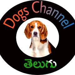 Dogs Channel TELUGU