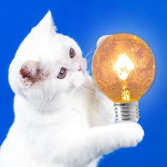 簡單的想法 — Simple Ideas