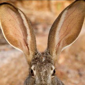 Distracting Ears