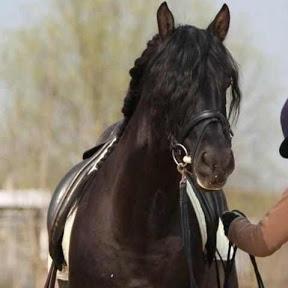 Horsedreames2010