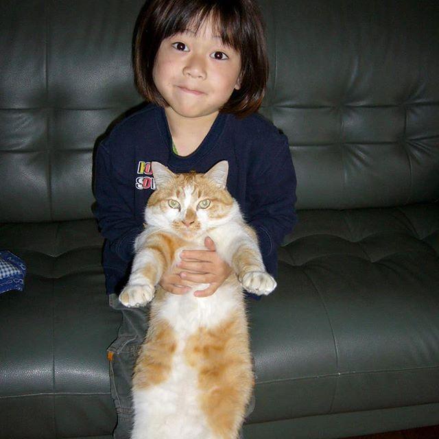 茶太郎を抱っこするソラ君(5才) 2007.3.24  茶太郎とソラ君はともに5才。茶太郎はソラ君と仲良しだったので、抱っこされても嫌がりませんでした。  #茶白猫茶太郎5才♂ #5才男子 #子供に抱っこされるネコ