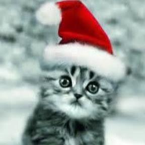 Zabawne Koty - Rozbawiają Ludzi -