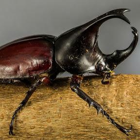 bọ cánh cứng / thú vui,côn trùng