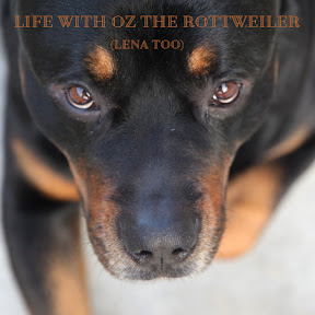 Life with Oz the Rottweiler