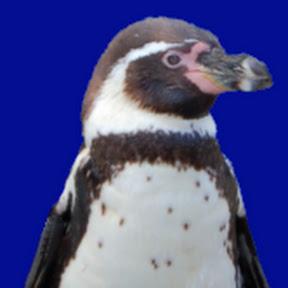 Penguin Tutor