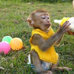 Monkey Dodo