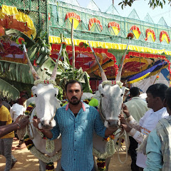 CATTLE'S Of INDIA