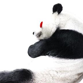ゆるパンダのひとりごと