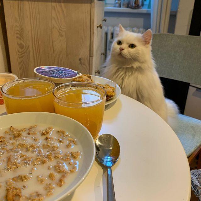 Nie die Bodenhaftung verlieren, immer noch jeden Morgen Frühstück mit der Katze. #ceolife #berlin #cattitude @emmasamtpfote