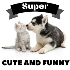 Super Cute and Funny
