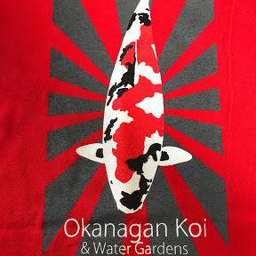 Okanagan Koi