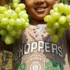 Robban Grapes