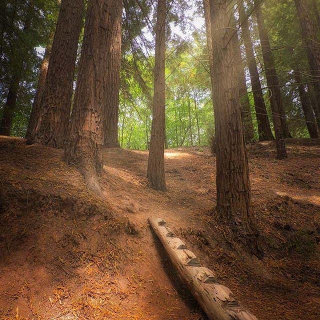 """En mi viaje por Cantabria no solo encontré impresionantes acantilados o """"pirámides"""". Si hay algo de lo que podemos disfrutar en esta región es de sus bosques, mágicos bosques... El bosque de las secuoyas es, posiblemente, el bosque que más me ha impactado, por las dimensiones del lugar y el ambiente que se puede observar. Simplemente te invita a entrar, y te absorbe.  #landscapephotography #fotografiapaisaje #naturephoto #fotografianatural #ok_spain #madewithluminar #cantabria #spain #spaintravel #cantabriainfinita #cantabria_y_turismo"""
