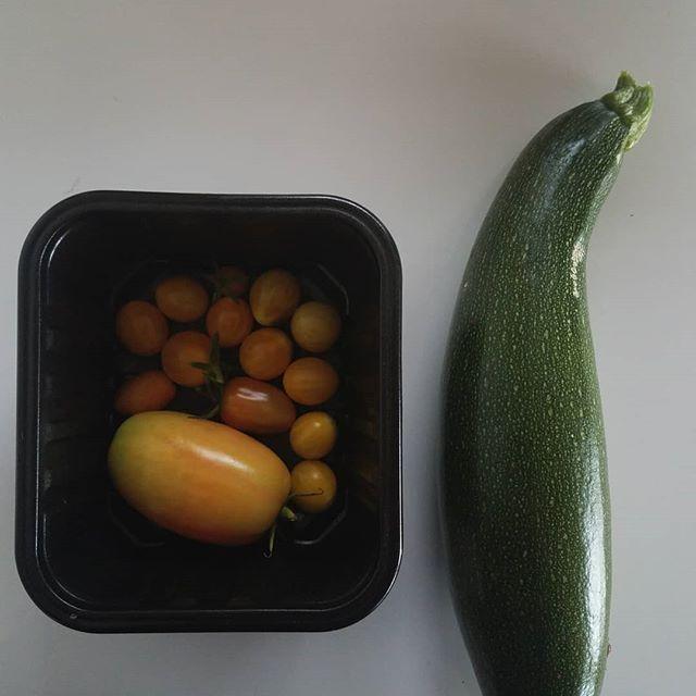 Petite récolte du jour! Les grosses tomates commencent à rougir, et deuxième courgette de l'année (j'ai oublié de faire les semis à l'intérieur alors j'ai quelques semaines de retard, je ne m'attend pas à de grosses récoltes considérant que les nuits sont déjà pas mal fraîches, les courgettes rondes de Nice sont un peu plus productives)! 😁😁😁 Le potager aura pas mal plus produit cette année que l'année passée, je suis déjà en train de penser à l'année prochaine et j'ai vraiment beaucoup d'idées!