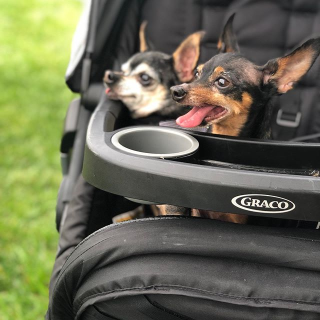 Its been awhile so here are my dogs in a baby stroller.