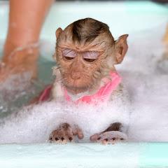 Monkey DouDou