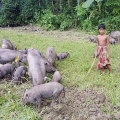 Village Animal's life