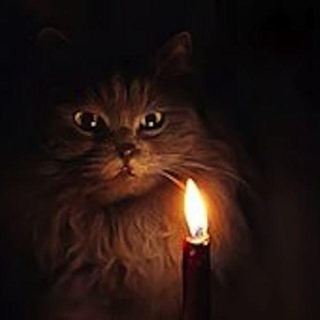 С древних пор кошки у многих народов ассоциировались с потусторонним миром и колдовством, считалось, что они могли избавить жилище от темных сил. Магия кошек – эффективное средство, позволяющее защитить всех обитателей дома, в котором живет кошка, от любой негативной энергии, от всей нечисти и духов.  #Кошка гадалка# мистика# умная кошка # кошки знают всё # кошка ведьма# кошка предсказательница# мы видим то, что не видят люди# https://www.youtube.com/channel/UCkOjEeBVNi8wC9bLjLZbFcw