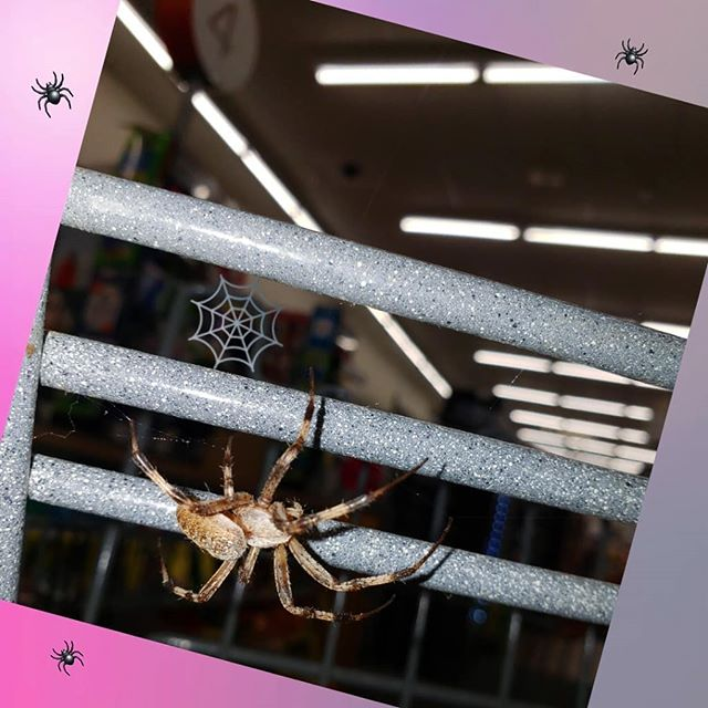 Meanwhile at work...👀 🕷 🕸 🕷 🕸 🕷 🕸 🕷 🕸 #spider #creepy #creepycrawly #aracnaphobia #justbreathe #cvsbreakdown #sold #justchillin
