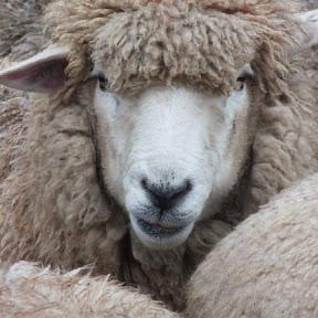 Fleece & Harmony