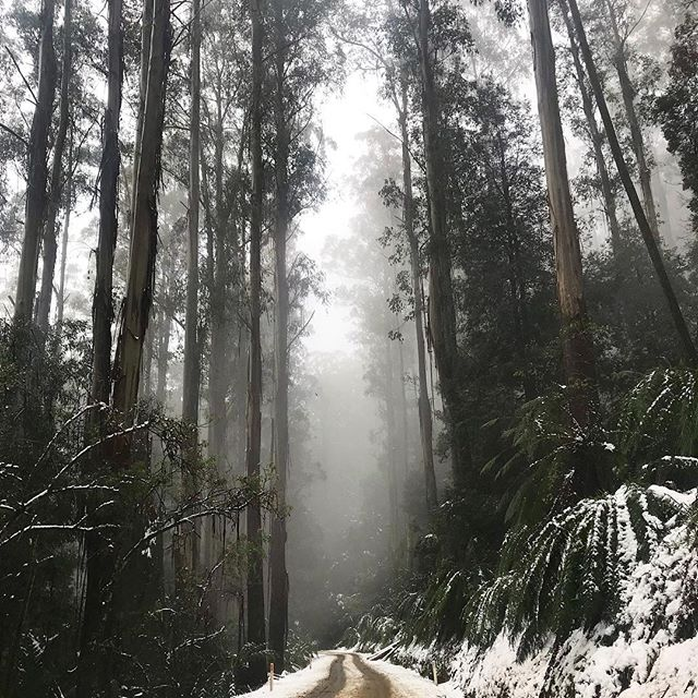 Chasing snow through the yarra ranges ☃️