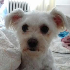 Maya the Cute Dog