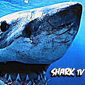 SHARK. tv