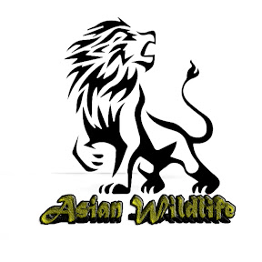 Asian Wildlife