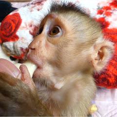 Monkey MiLi