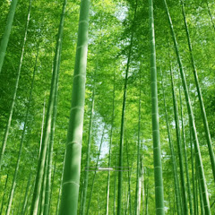 Hindustani Green