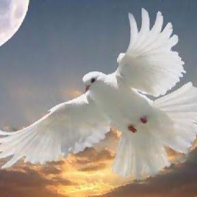 Paz pela Paz
