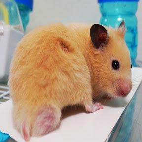 pooh hamster