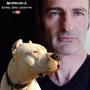 MANDRAGULA Kennel DOGO ARGENTINO